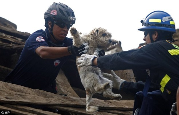 Dog Rescued After Quake - Temecula Dog Trainer - Dogs In The News