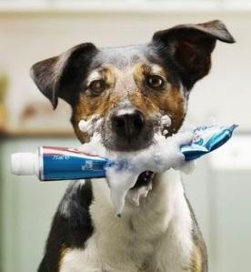 temecula dog trainer-behavior modification-problem solving