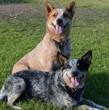 Temecula dog training at home